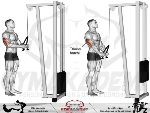 Triceps rope push-down