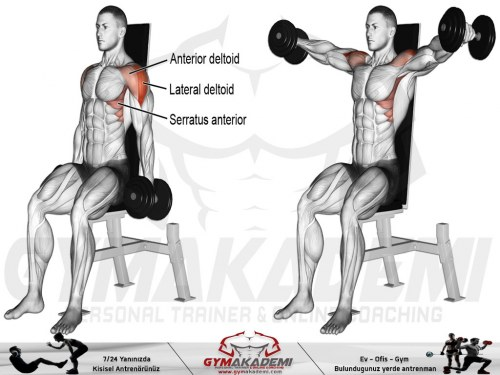 Seated dumbbell lateral raise
